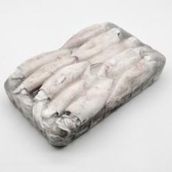 Calamar entero congelado Extra